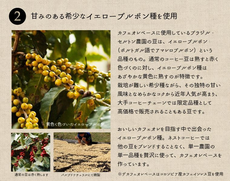 カフェオレベースに使用しているブラジル・セルトン農園の豆は、イエローブルボン(ポルトガル語でアマレロブルボン)という品種のもの。通常のコーヒー豆は熟すと赤く色づくのに対し、イエローブルボン種はあざやかな黄色に熟すのが特長です。栽培が難しい希少種ながら、その独特の甘い風味となめらかなコクから近年人気が高まり、大手コーヒーチェーンでは限定品種として高価格で販売されることもある豆です。おいしいカフェオレを目指す中で出会ったイエローブルボン種。ネストコーヒーでは、他の豆をブレンドすることなく、単一農園の単一品種を贅沢に使って、カフェオレベースを作っています。デカフェオレベースは、コロンビア産カフェインレス豆を使用しています。